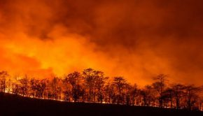 ambiente Marx Greta Amazzonia incendio
